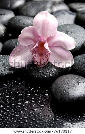 Macro of orchid on wet pebble - stock photo