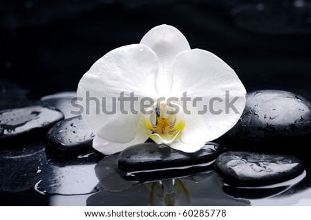 Macro of orchid spa stone on black background