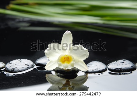 Macro of orchid with green plant on black pebbles  - stock photo