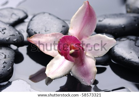 Macro of pink orchid and stone with water drops - stock photo