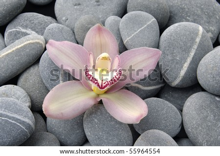 Macro of pink orchid on pebble - stock photo