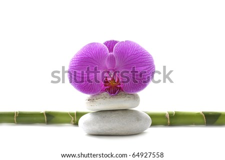 Macro of pink orchid on stones with bamboo stem - stock photo