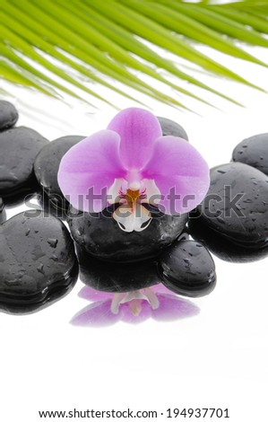 Macro of pink orchid with black stones with palm