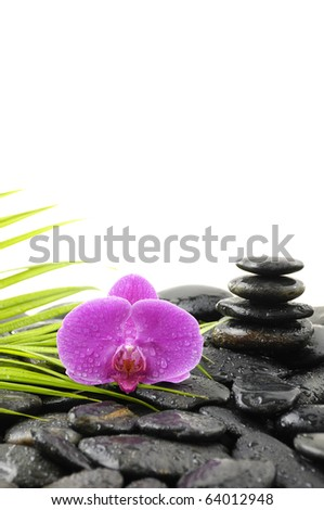 macro of pink orchid with pebble , bamboo stem in water drops