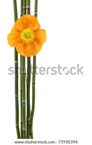 Macro of poppy flower with thin bamboo grove with copy space