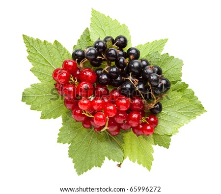 Macro of red and black currant bunches and leaves isolated on white - stock photo