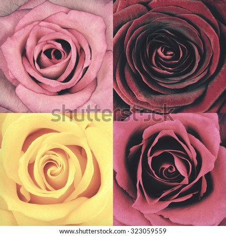 Macro of Rose Four Flower Full Frame Backgrounds. Flowers are in a shabby sheek vintage and retro style. - stock photo