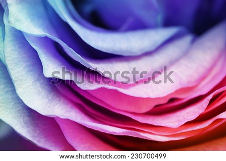 Macro of rose petals with tone effects: floral background - stock photo