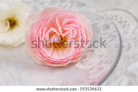 Macro of rose with white and pink on lace texture - stock photo