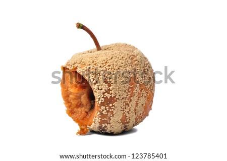 Macro of rotten apple isolated on white background - stock photo