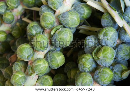 Macro of several green brussel sprout stalks at the farmers market - stock photo