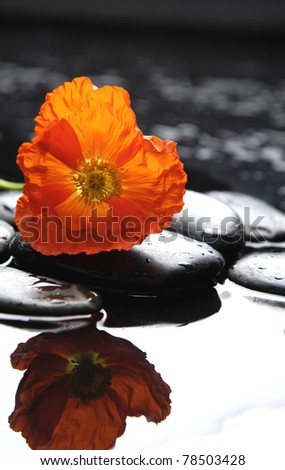 macro of spring flower with black stones reflection - stock photo