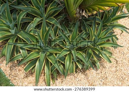 Macro of succulent plant in the desert - stock photo