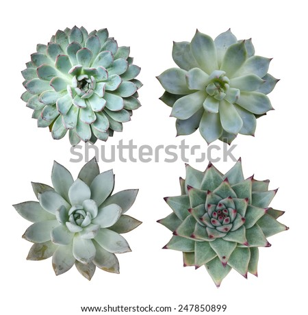 Macro of succulent plant in the desert collection - stock photo
