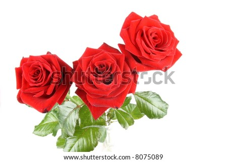 Macro of three red rose blooms - stock photo