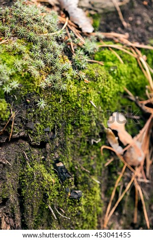 Macro of tree trunk covered with green moss