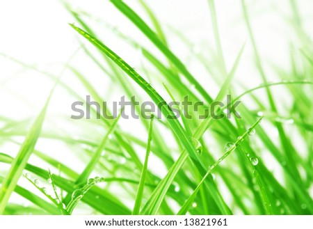 macro of water droplets on green grass; (shallow DOF) Series A3 - stock photo