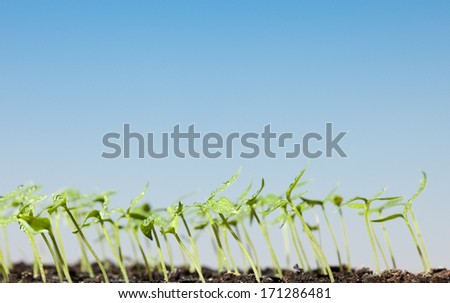 Macro of water drops on sprouts over sky background  - stock photo