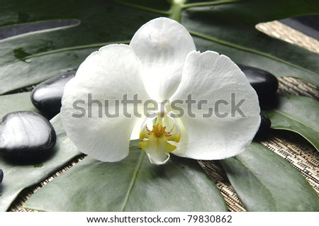 Macro of whit orchid and zen stones on monstera plant