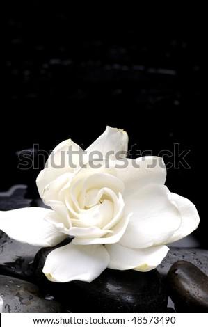 Macro of white flower on pebble - stock photo