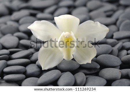 Macro of white orchid on pebbles