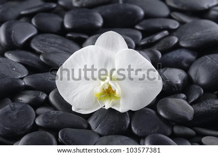 Macro of white orchid on stones background