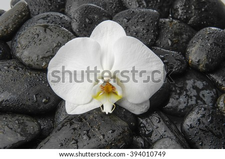 Macro of white orchid on wet black stones