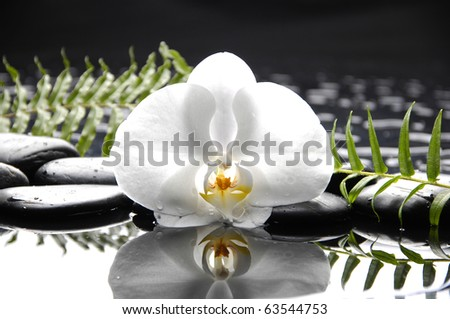 macro of white orchid with green fern reflection