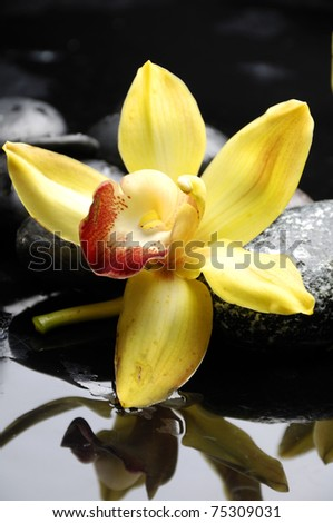 Macro of yellow orchid and therapy stones on pebble - stock photo