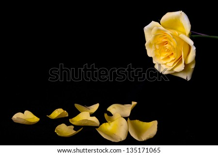 Yellow Rose Petals Stock Images, Royalty-Free Images ...