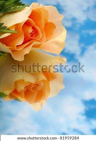 Macro peach Rose very shallow depth of field with clouds - stock photo