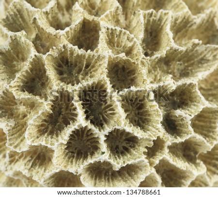 Macro photo of a coral rock. - stock photo