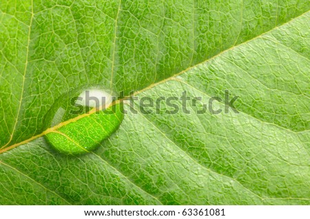 macro photo of a water drop on leaf - stock photo