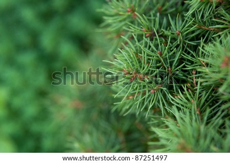 macro photo of green fir-tree on the background - stock photo