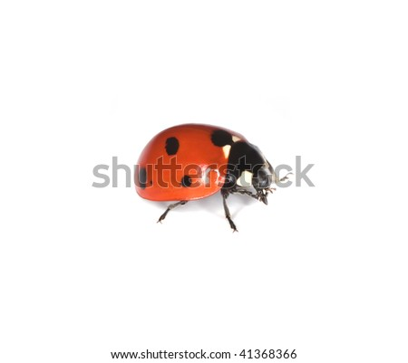 Macro photo of Ladybird isolated on white background