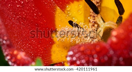 Macro photo of red-yellow flower in water drops