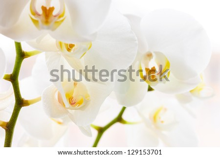 Macro photo of some beautiful white orchids flowers - stock photo