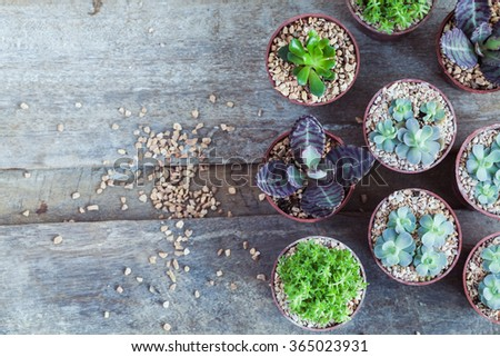 Macro photo of succulents. Desert plants in small plants. Succulents and cactus in different concrete pots. Home decoration. - stock photo