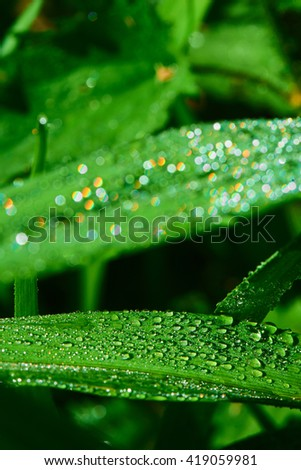 Macro photo of water drops on a green grass