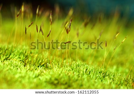 macro photo with green moss background - stock photo