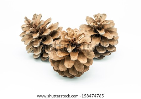 macro photograph of a pinecone on white background - stock photo