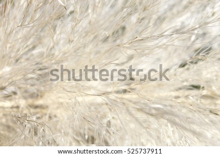 Macro photographic plant texture in daylight, background image