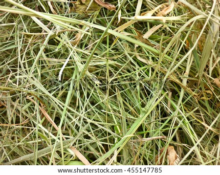 Macro photography, mown green hay, summer garden, field, meadow grass, nature background - stock photo