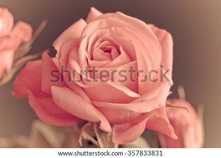 Macro picture of a Rose (infinity Rose) - stock photo