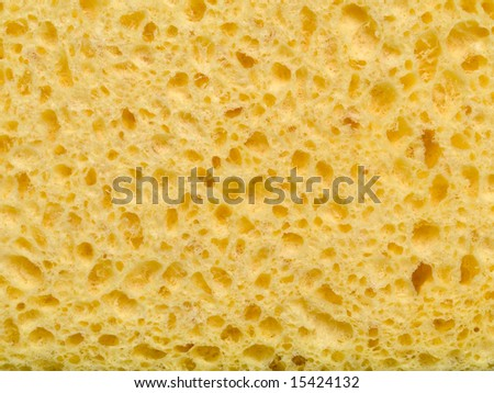 Macro picture of a wet yellow sponge