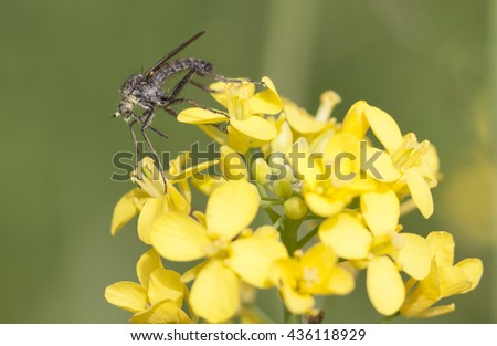 Macro picture of an insect on a yellow flower - stock photo