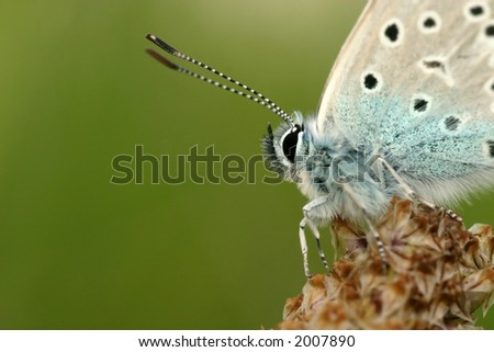 Macro portrait of a butterfly