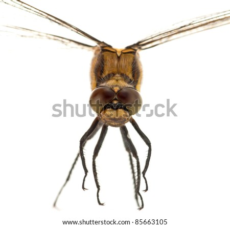 Macro portrait of a dragonfly against a white background - stock photo