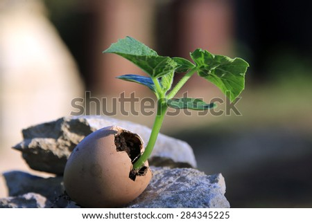 macro seedling of cucumbers in the eggshell, standing on a stone on a background of spring garden