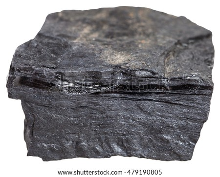 macro shooting of metamorphic rock specimens - carbonaceous shale stone (bone coal, slaty coalbone) isolated on white background